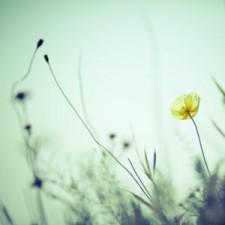 Йога-нидра под живую медитативную музыку дуэта «Аутентика» 18 июня в 13:30